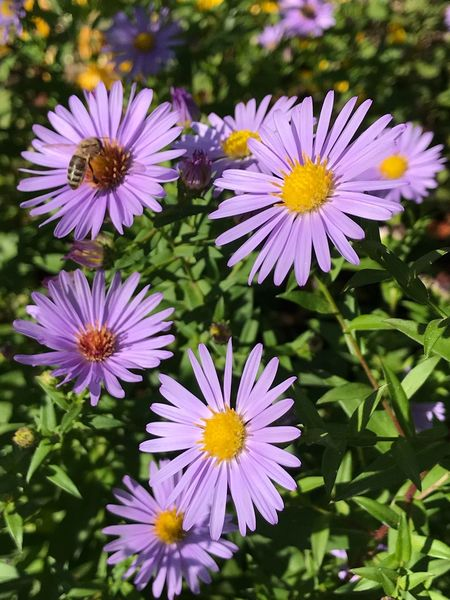 Flower Petal Growth Nature Fragility Freshness Beauty In Nature Flower Head Plant Blooming Outdoors No People Day Close-up Osteospermum Bee 🐝 Bee