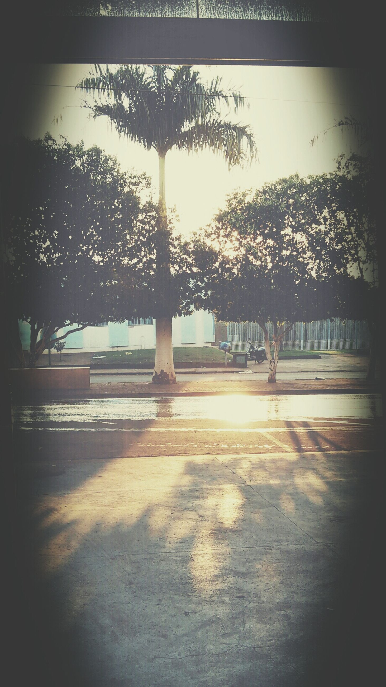 tree, sunlight, shadow, indoors, silhouette, tranquility, nature, water, tree trunk, growth, built structure, day, sun, reflection, bench, empty, tranquil scene, table, window, no people