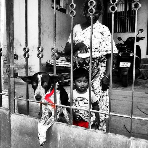 Chaddi friends... Bestfriend Wearethebest Pondicherry _cic _oye _soi Photographers_of_india Streetphotos Streetstyle Swag Bnw_india BlackandColor Bnw F4F Follow4follow Indiaclicks Doglover Petlover Peta