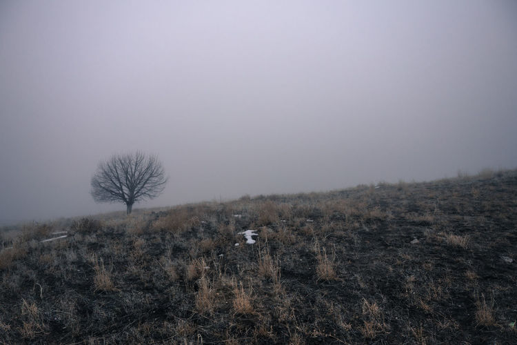 Bare Tree On Landscape Against Foggy Sky