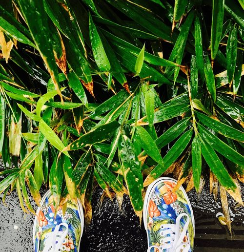 Rain rain rain Green Color Low Section Shoe Leaf Human Leg Growth Real People Personal Perspective One Person Lifestyles Plant Human Body Part Outdoors Day Nature Close-up Shoes Vans Shoes Flower Collection