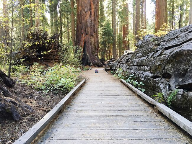 Path Big Trees Arnold California United States Outside Northern California Sequoia Redwoods California Redwoods California State Parks