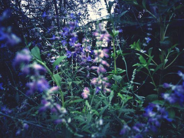 Blue EyeEmNatureLover#flower#Nature_collection