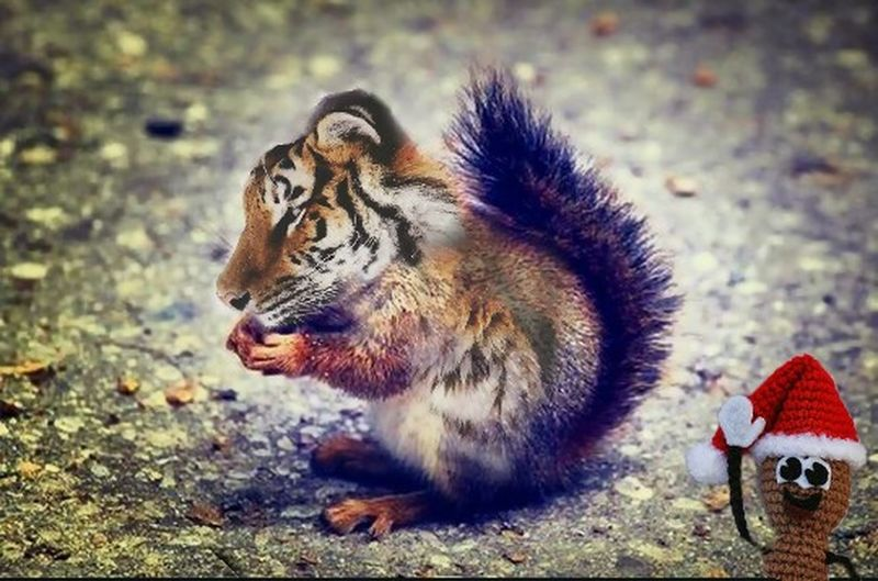 Tiger Squirrel Squirrel Tiger Ratatosk
