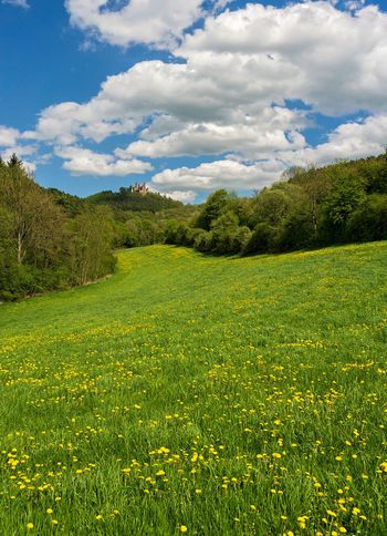 Thuringen Thuringia Castle Ruin Field Grass Green Color Hanstein Landscape Meadow Nature No People Outdoors Scenics Thüringen Erleben Tranquil Scene