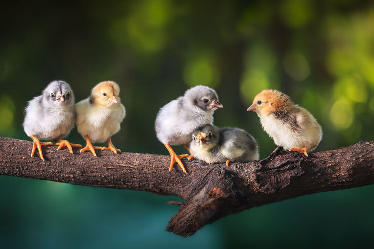 Animal Animal Family Animal Themes Animal Wildlife Animals In The Wild Bird Close-up Day Focus On Foreground Group Of Animals Nature No People Outdoors Plant Selective Focus Three Animals Tree Vertebrate Wood - Material Young Animal Young Bird