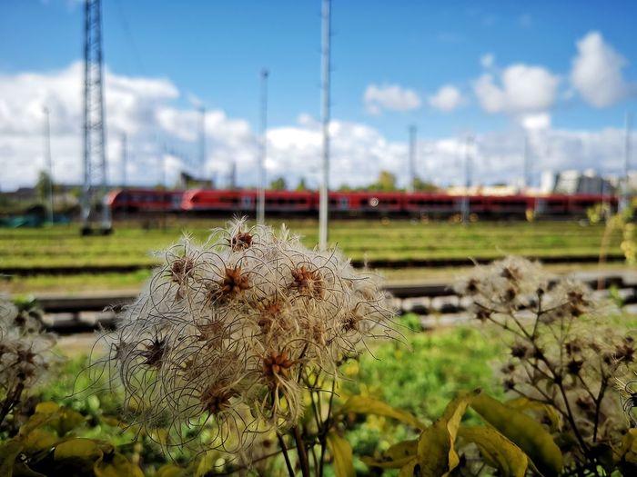 Rail yard and