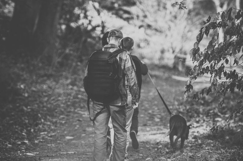 Men Walking Down a Wooded Trail with a Dog Black & White Adult Black And White Bonding Dog Domestic Animals Forest Friendship Full Length Lifestyles Mammal Men Nature One Animal Outdoors People Pets Real People Rear View Walking