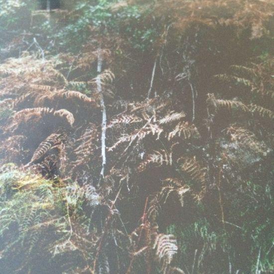 Reproduction Photo Landscape