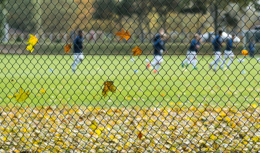 Autumn leaves on chainlink fence against men playing soccer