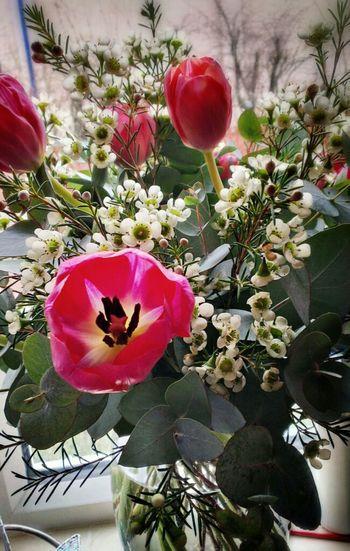 Flowers Tulips Eye4photography  EyeEm Best Shots - Flowers