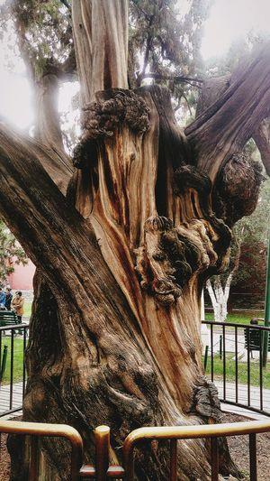 生命の神秘 Day No People Outdoors Tree Close-up Nature Sky EyeEmNewHere