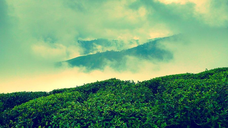 Glenburn Tea State, Darjeeling, India First Eyeem Photo