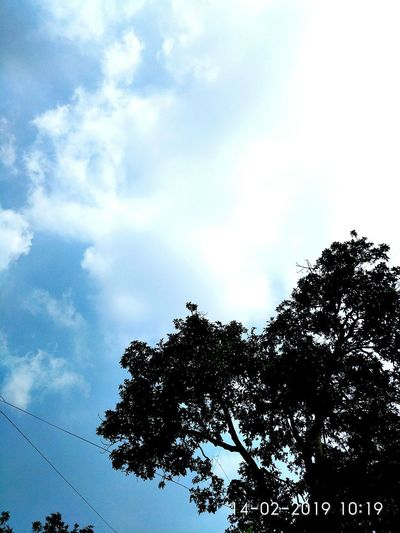 tree and white cloud in the blue sky Tree Trees Trees And Sky Trees And Sky Tree Photography Sky Blue Sky Blue Bluesky Sky And Clouds Sky And Trees Clouds And Sky Cloud And Sky Tree Pixelated Bird Silhouette Flock Of Birds Sky Close-up Cloud - Sky