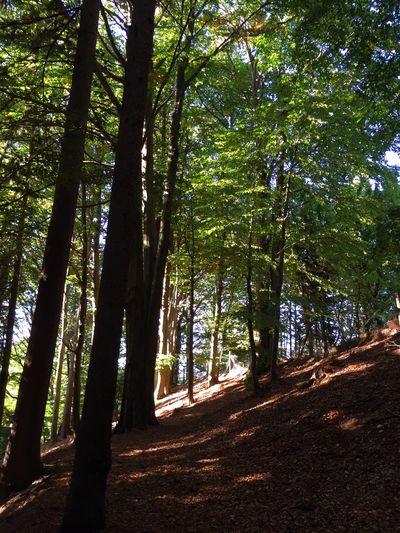 Das Licht am Ende des Weges. Nature Natural Beauty Forest In The Forest Path Fichtelgebirge