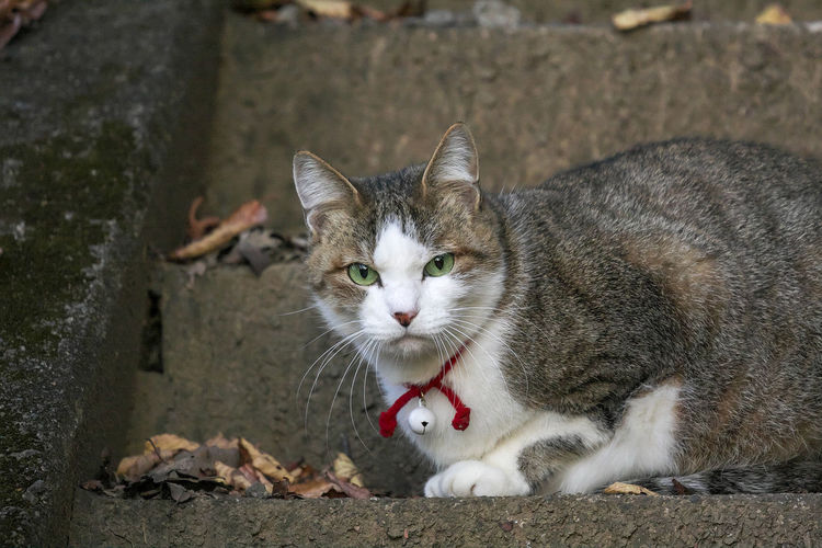 Portrait of cat on street