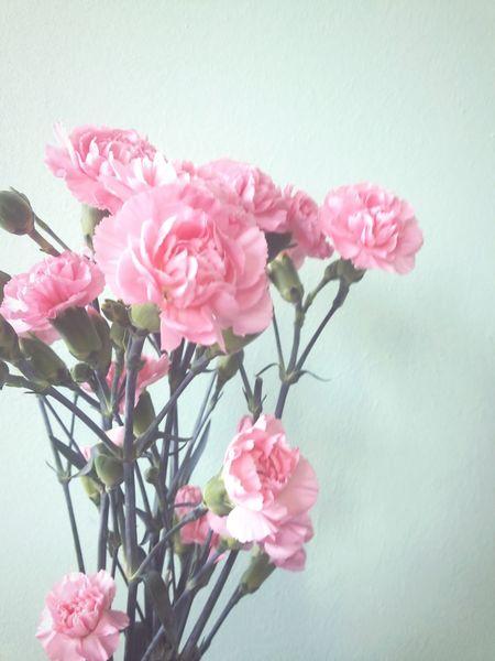 Floweeers ♡ Relaxing Taking Photos Enjoying Life Flowers Pink Flower Cloves