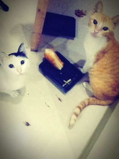 The look in their eyes.. After a fight with a bad, black, gatecrasher neighbor's cat.. U guys deserve a HAPPY meal.. Dad'scominghomeverysoon Don'tuworry ??