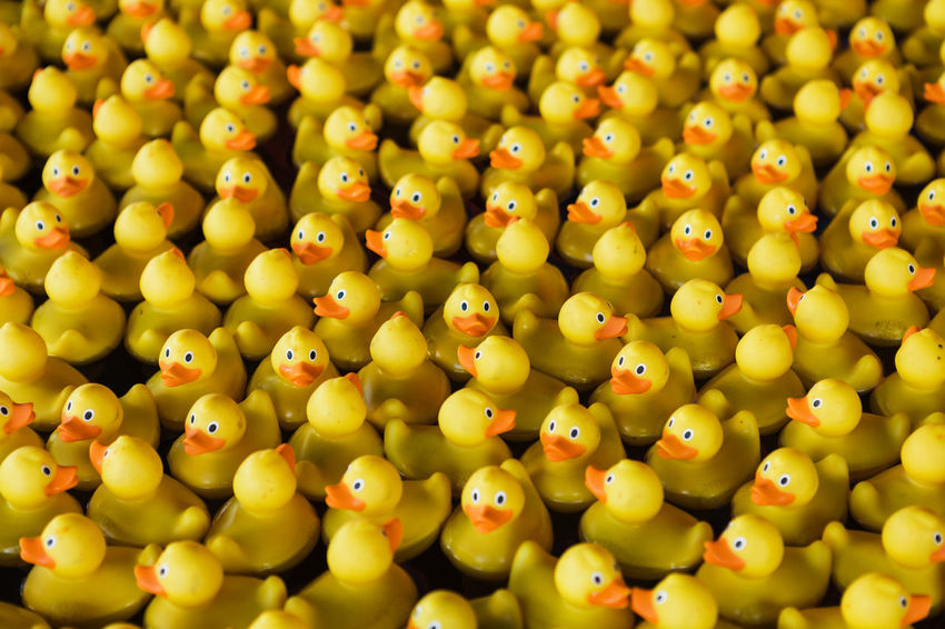 Abundance Animal Representation Arrangement Backgrounds Close-up Food Full Frame High Angle View In A Row Indoors  Large Group Of Objects No People Order Repetition Representation Rubber Duck Selective Focus Still Life Toy