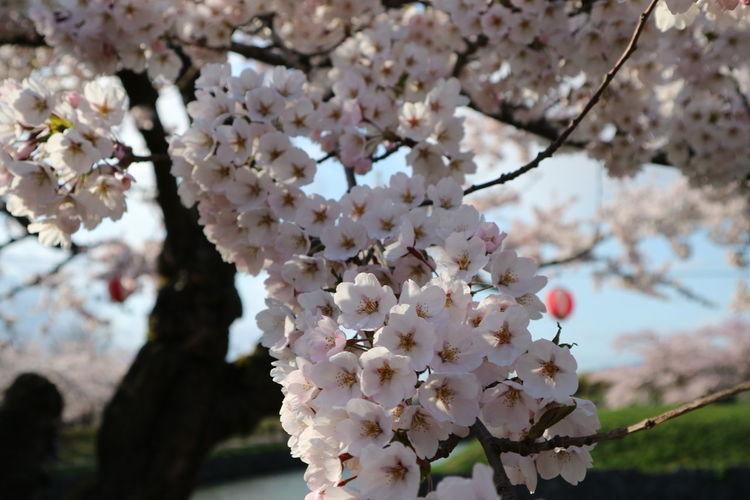 Flower Cute