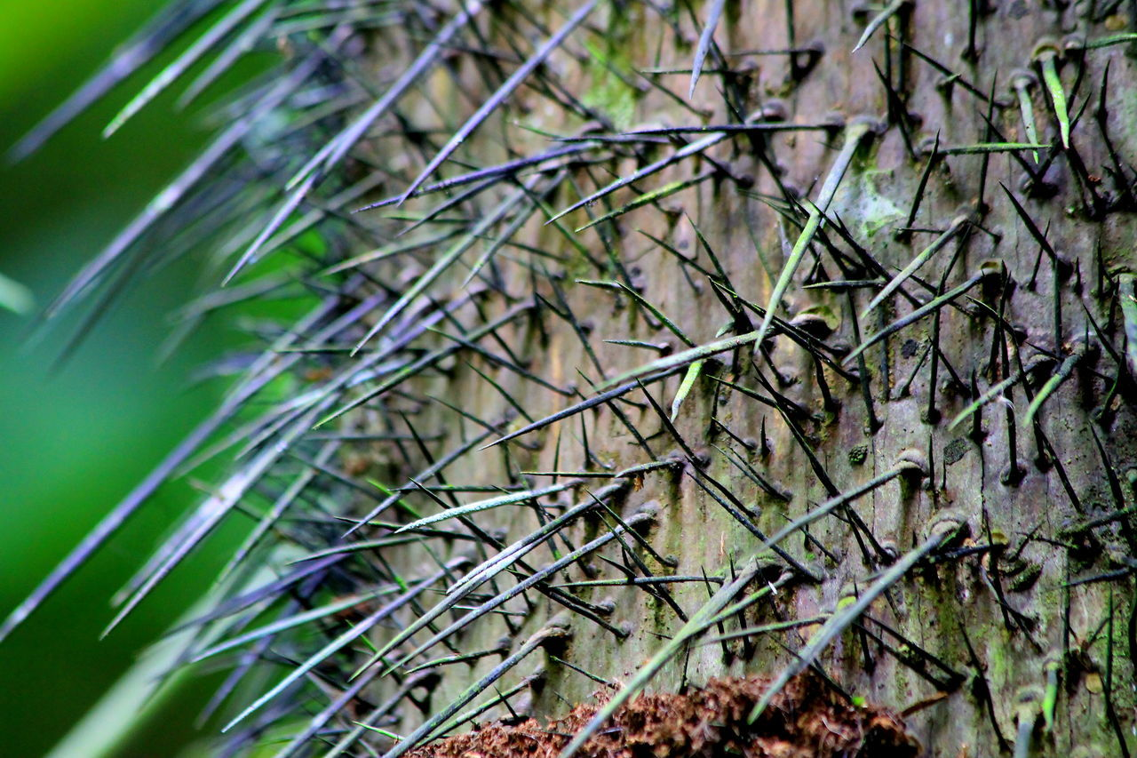 day, outdoors, no people, growth, nature, green color, close-up, plant, focus on foreground, tree, bamboo - plant