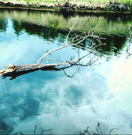 AndjelaMancic First Eyeem Photo Nature Green Lake Tree