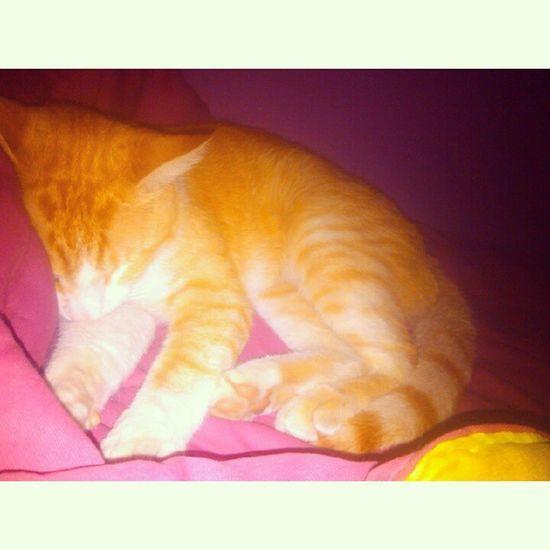 Nada más lindo que dormir con vos Extrañitis Cat Cazador  Sweet pet
