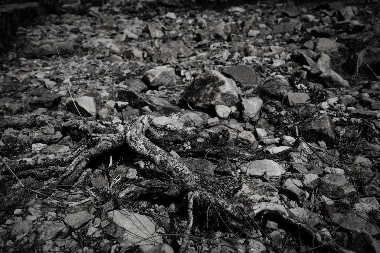 FULL FRAME SHOT OF DRIED LEAVES ON LAND