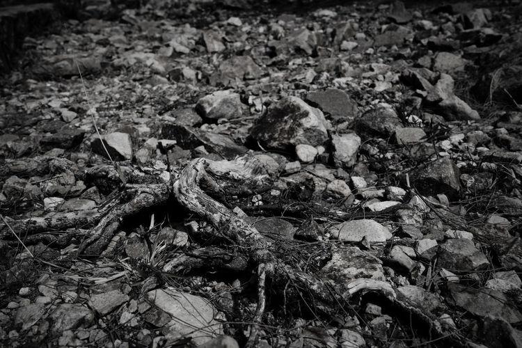 Full frame shot of dried leaves on ground