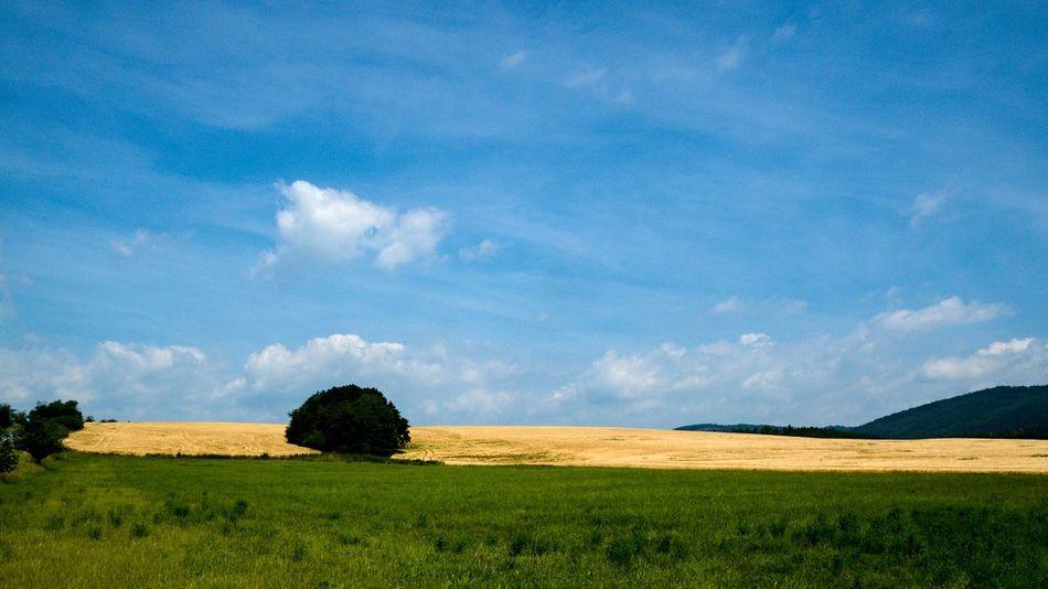 Landscape, Window XP revival :) ... Beauty In Nature Blue Cloud - Sky Clouds Czech Day EyeEm Landscape Field Grass Green Landscape Nature No People Outdoors Revival Scenics Sky Tranquil Scene Tranquility Tree Windows XP Yellow