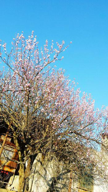 Spring Tree Sunlight Sunny Peachtree