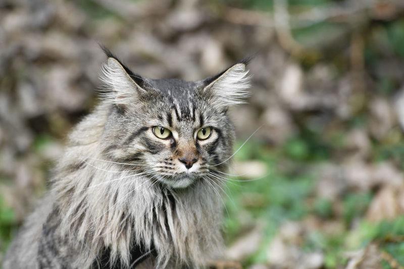Close-up portrait of cat outdoors
