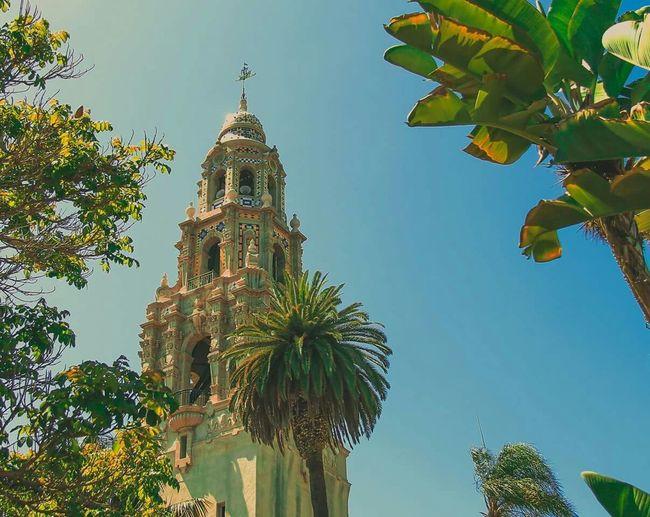 California Travel Architecture San Diego Palm Trees
