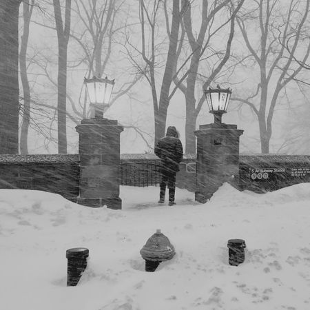 Blizzard 2016 Check This Out Showcase: February Central Park NYC The Week On Eyem Snow ❄ Blizzard2016 The Street Photographer - 2018 EyeEm Awards