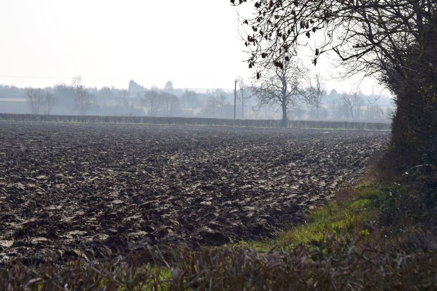 Taking Photos Relaxing Contrast Hedges Trees Field Mist Shadows Furrows Nikond3300