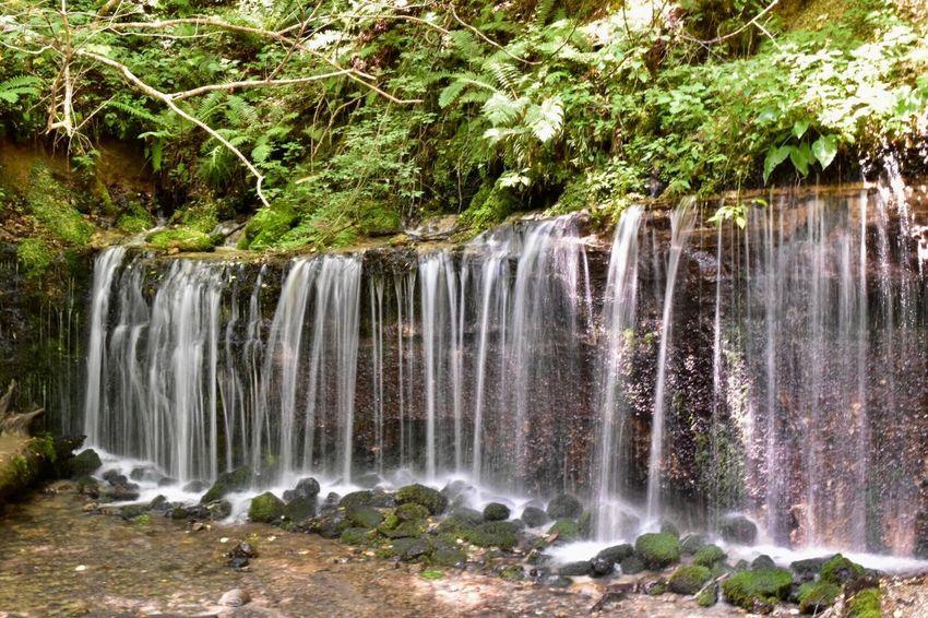 Shiraito Falls【白糸の滝・軽井沢】 Shiraito Falls Japan Japanese Superb View Nature River Karuizawa,Japan Waterfall Water Plant Beauty In Nature Scenics - Nature Tree Long Exposure