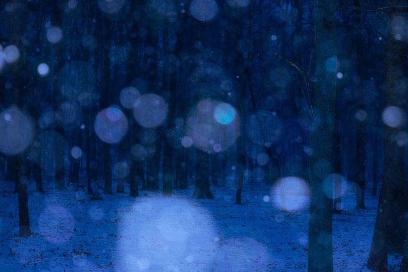 Tree Night Snow Winter No People Atmospheric Nature Beauty спокойствие Tranquility атмосфера красиво зима Wintertime снег
