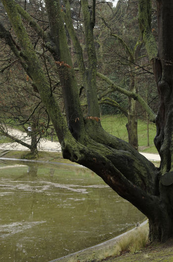 Scenic view of tree