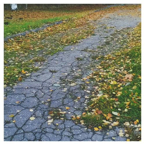 Autumn Colors краски осени EyeEm осень Fall Autumn VSCO 🍂🍂🍂