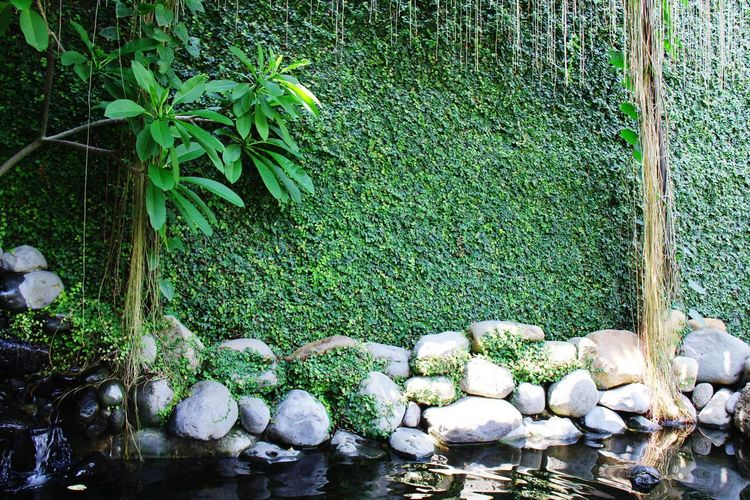 wall plan Gardenpool GardenWall Water Green Color Plant Life Growing In Bloom Green Greenery Stone - Object