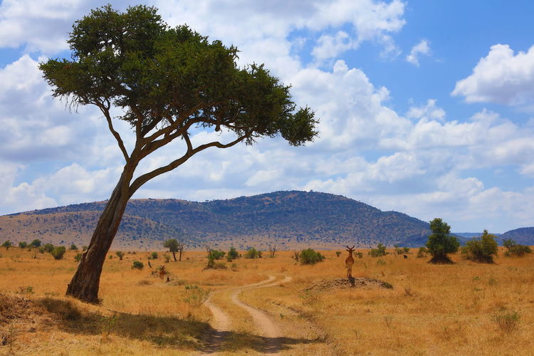 Scenic view of savannah