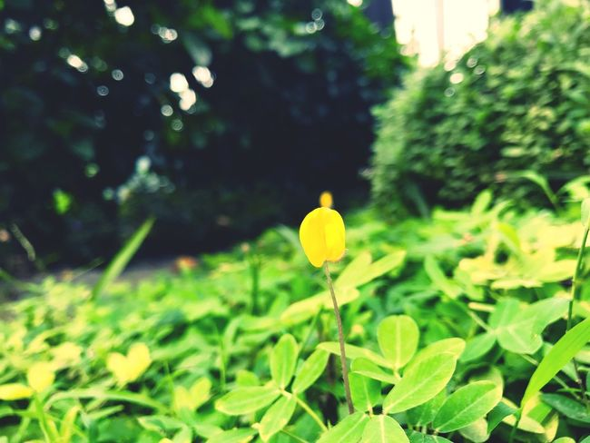 a yellow tiny flower EyeEm Nature Lover EyeEm Selects EyeEm Best Shots Plant Growth Green Color Nature Focus On Foreground Plant Part Beauty In Nature Leaf Flower Freshness No People Yellow Close-up Flowering Plant Day Outdoors Fragility Tree Flower Head Green Autumn Mood