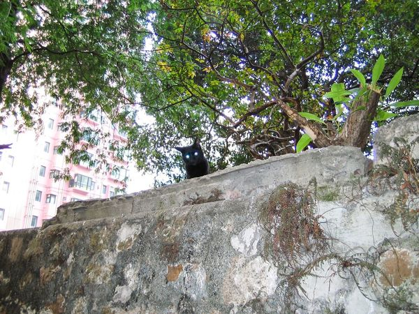 Stray Cat Cats Black Cat Cat Watching Cat Photography Cat Lovers Laser Cat Laser Eyes at HongKong