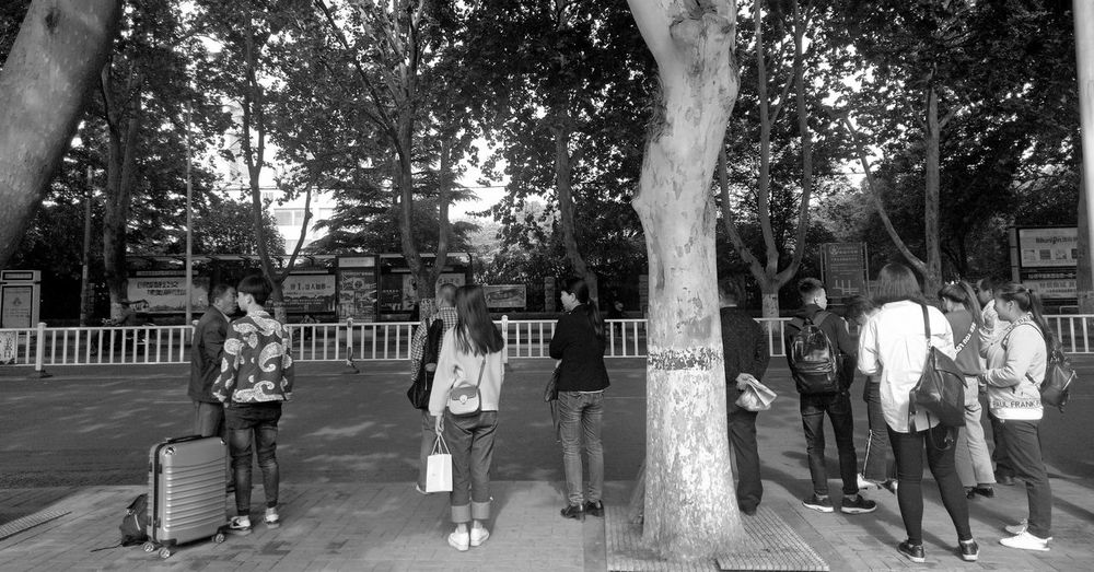 站牌 Tree Full Length City