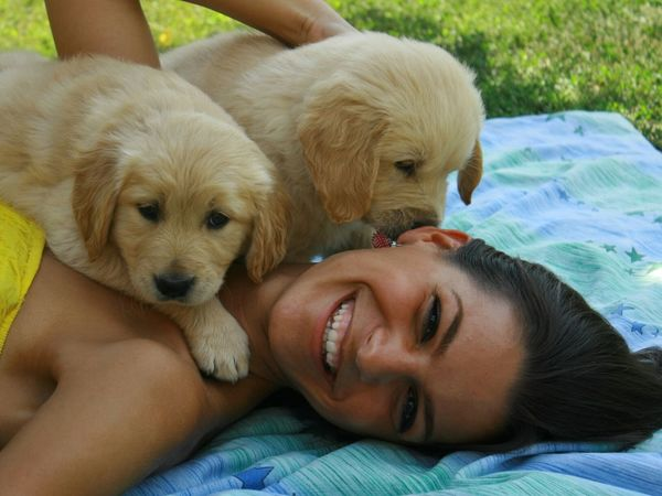 Taking Photos Enjoying Life Smile Love Happy Goldenretrievers Puppies Cute Lovemydogs