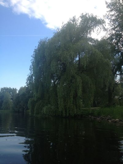 Weeping Willow Willow Tree Willow On The Water Canal Waterside Rideau Canal Tree Water Nature Beauty In Nature Reflection Tranquility Tranquil Scene River No People Outdoors Growth Scenics Day Sky Forest