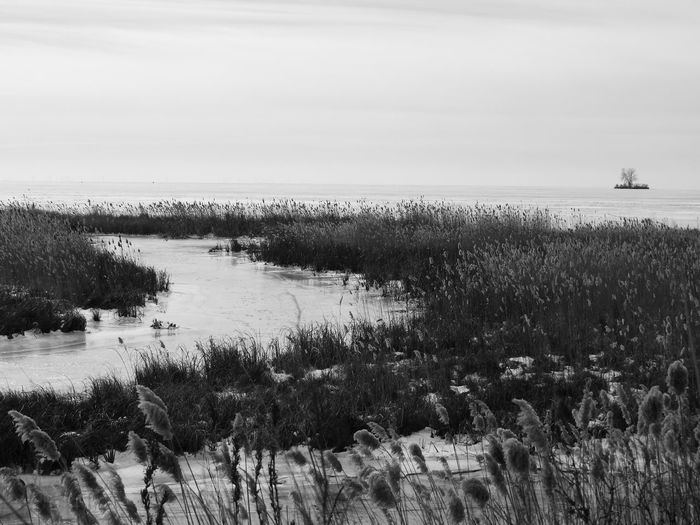 Ominous Wasteland Beauty In Nature Blackandwhite Day Estuary Freezing Freezing ❄ Frozen Lake Grass Growth Horizon Over Water Marram Grass Nature No People Ontario Outdoors Scenics Sea Sky Tranquil Scene Tranquility Water