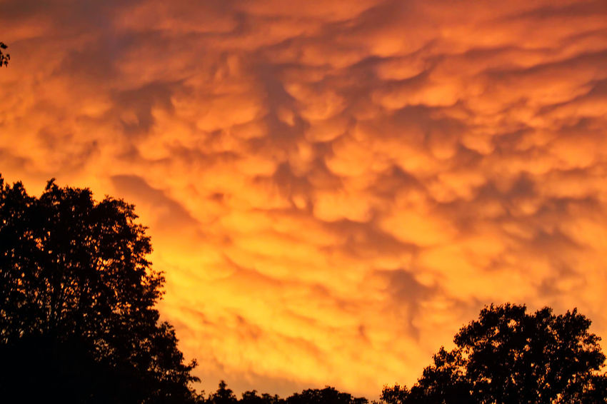 Rare mammatus cloud formations at sunset after the storm in midwestern town. Cumulonimbus Cloud Mammatus Mammatus Clouds Natural Beauty Orange Sky Treelined After The Storm Beauty In Nature Cloud - Sky Cloud Formations Fluffy Clouds Mammatocummulus Nature No People Outdoor Photography Outdoors Purple Sky Rare Beauty Scenics Silhouette Sky Sunset Sunset Sky And Clouds Tranquility Tree
