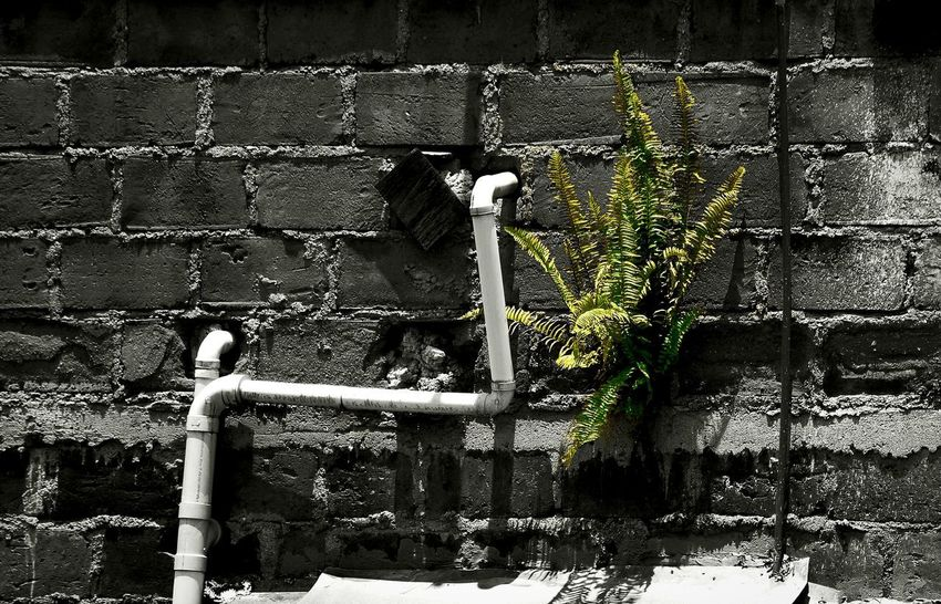 Life do wonderful things Plant Flower Wall Architecture Built Structure Building Exterior D5300 18-140mm Nikon EyeEm Best Shots Nature_collection Nature Photography Nature EyeEm Nature Lover Green Green Color Monochrome Blackandwhite Black And White Full Frame Backgrounds Cleaning Equipment Car Wash Close-up Architecture Built Structure Bad Condition Graffiti Street Art Abandoned