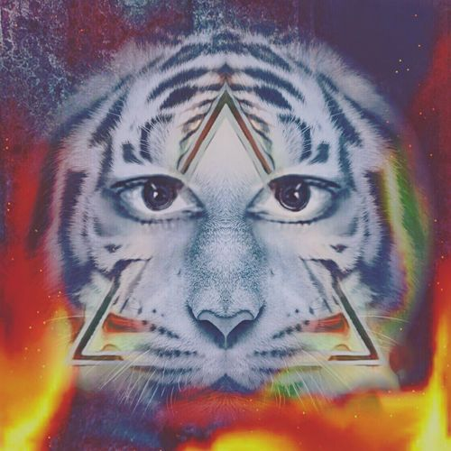 Digital Art Tiger Eyeofthetiger EYEOFRA Digital Imagery Imagination Image Imageoftheday Beenawhile Fans Tiger-love That's Me Notstrangeforme Michelle Reddicliffe That's Me Hello World Hanging Out Check This Out Enjoying Life SHEFFiELD BABYYY! Sensual_woman Georgous Love